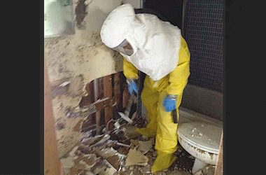 Asbestos, Mold & Lead Remediation